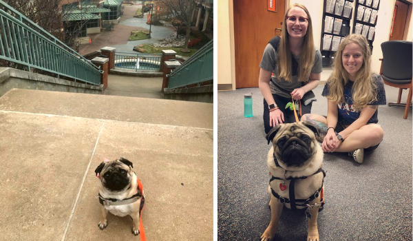 (Left) Gus taking a stroll by the OSU-Tulsa Fountain (Right) Gus visiting Student Services with mom Kelsey Mathis & student Rachel Millea