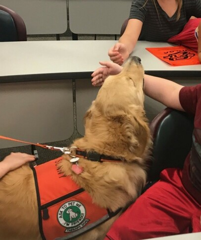 Sunny spreading pet therapy joy to OSU-Tulsa visitors